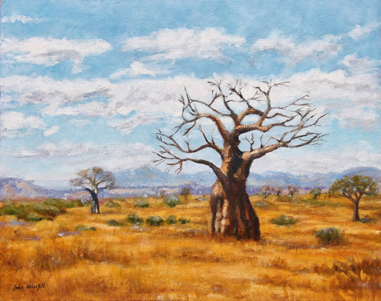 Baobab Trees Soutpansberg Limpopo - Oil Painting - South Africa Art Gallery